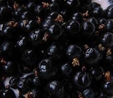 Grosellas negras